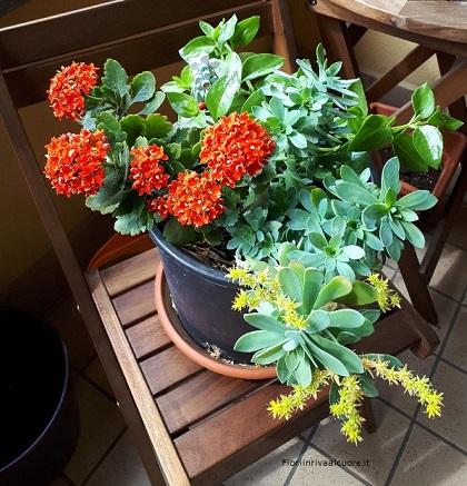 Composizione con Kalanchoe, Aptenia Cordifolia e Crassula