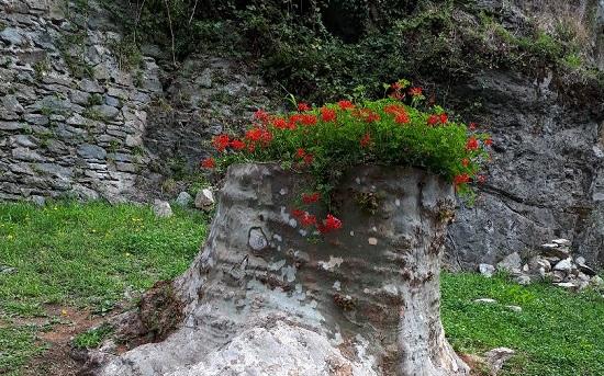 Una fioriera naturale