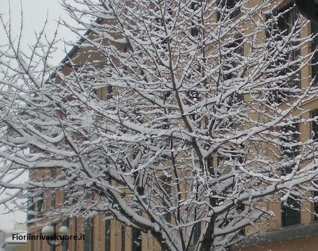 Piccoli accorgimenti per proteggere le piante durante la stagione fredda
